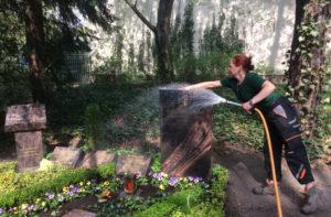 Gießen der Bepflanzung mit einfacher Steinsäuberung