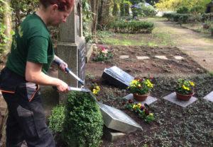 Schnitt von Bodendeckern und Rahmengehölzen sind Teil der Grabpflege in Leipzig