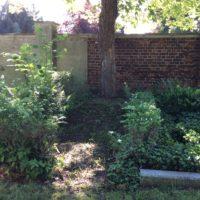 bewachsene Grabstätte