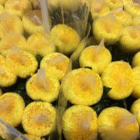 Chrysantheme 'Mori' (gelb)