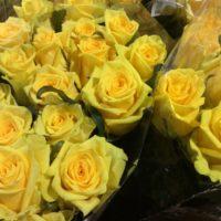 Rose 'Good Times'