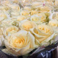 Rose (cremeweiß)