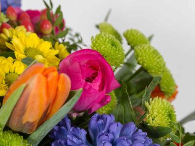 Unsere wunderschönen Blumen