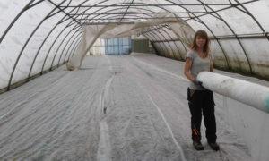 Mit Vlies abgedeckte Eisbegonien im Foliezelt in der Gärtnerei Otterwisch.
