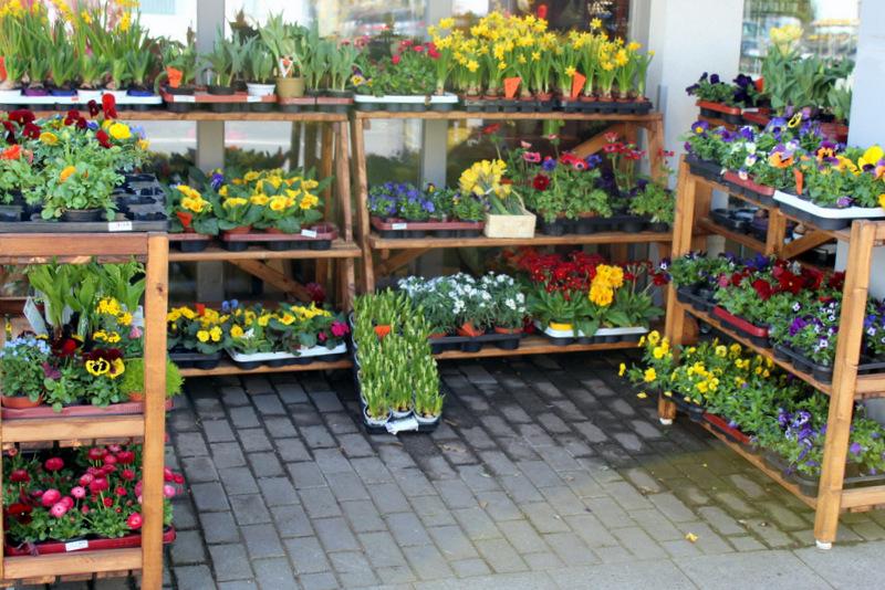Auch für die Außenbepflanzung haben wir ein großes Angebot für Sie.e.