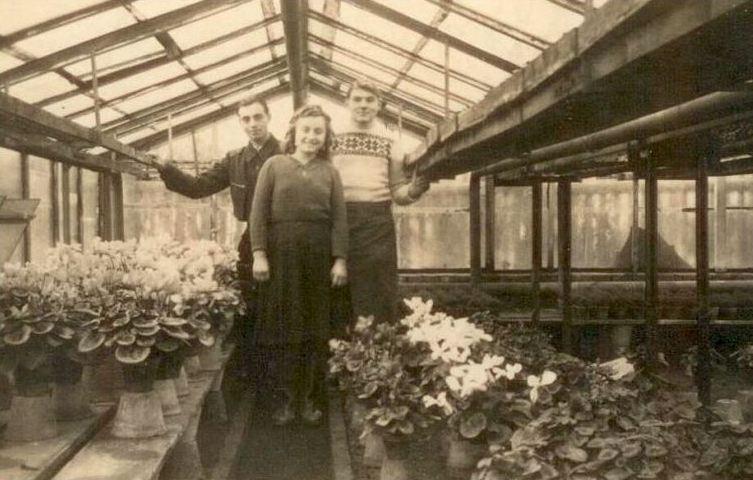 Gärtnerei 1948 in der Mitte Mutter von Steffen Schröder