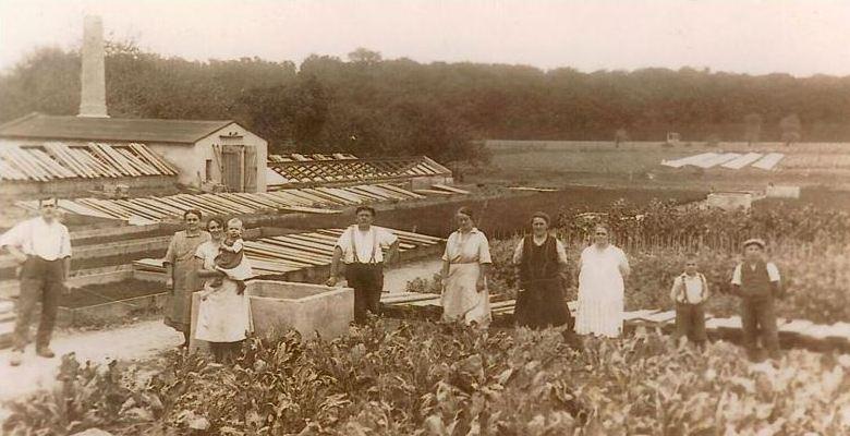 gärtnerei um 1915 damals in Hartmannsdorf