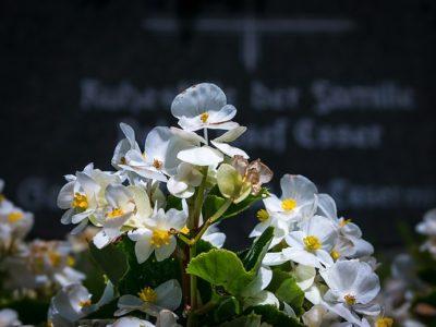 Frühjahrserwachen in der Gärtnerei