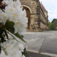 Weiße Rhododendronblüte