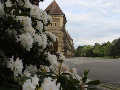 Blumenhalle am Südfriedhof – Rhododendron Südfriedhof  Leipzig