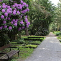 Gräber unter blühenden Rhododendron