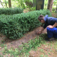 Grabpflege Leipzig Beispiele - so machen wir's - Pflegemaßnahmen Neugräber
