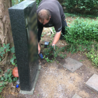 Grabpflege Leipzig - Einsetzen von Efeu