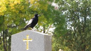 NABU Naturschutz - Krähe auf Grabstein