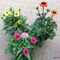 Pflanzen im Herbst