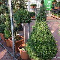 Unsere Pflanzen - Rahmengehölze