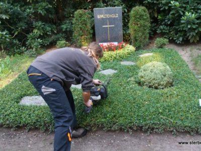 Grabpflege in Leipzig – so machen wir's – Das Schneiden der Bodendecker