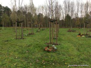 Das Baumgrab - Grabgestaltung